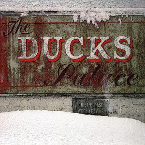 The Ducks Palace